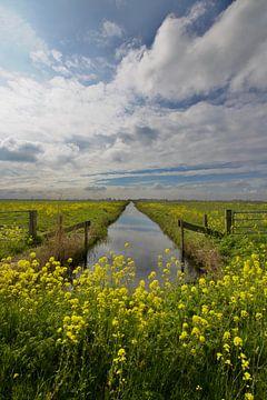 Holländischer Frühling von Sven Zoeteman