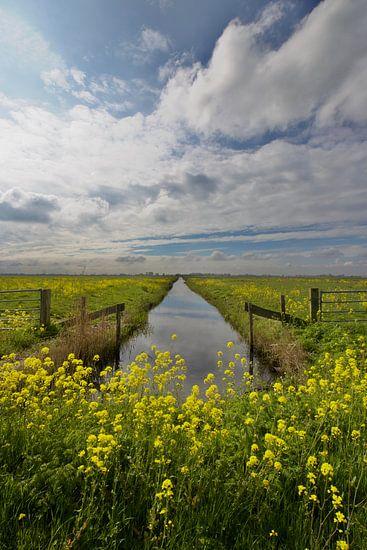 Holländischer Frühling