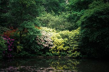 Bloemenpracht aan het water von sandra ten wolde