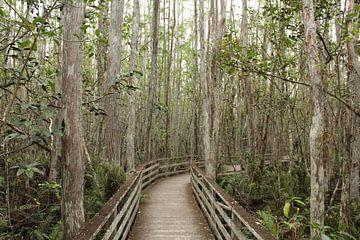 Mangrove park Florida Verenigde Staten van Martin van den Berg Mandy Steehouwer