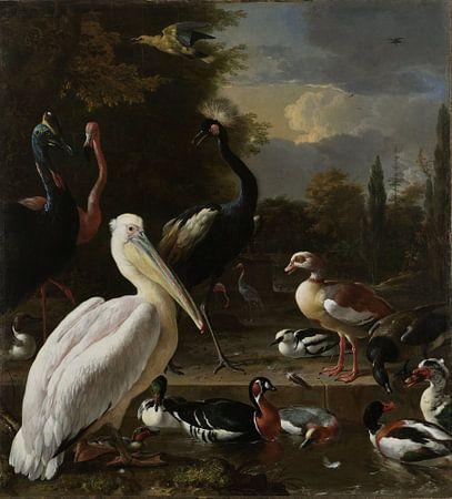 Een pelikaan en ander gevogelte bij een waterbassin, 'Het drijvend veertje'