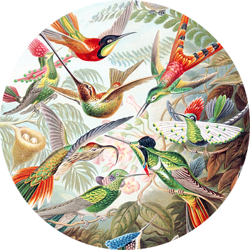 Hummingbirds van Jacky Gerritsen