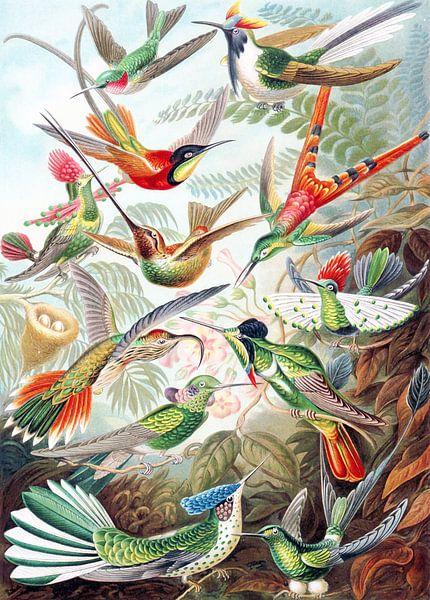 Hummingbirds von Jacky Gerritsen