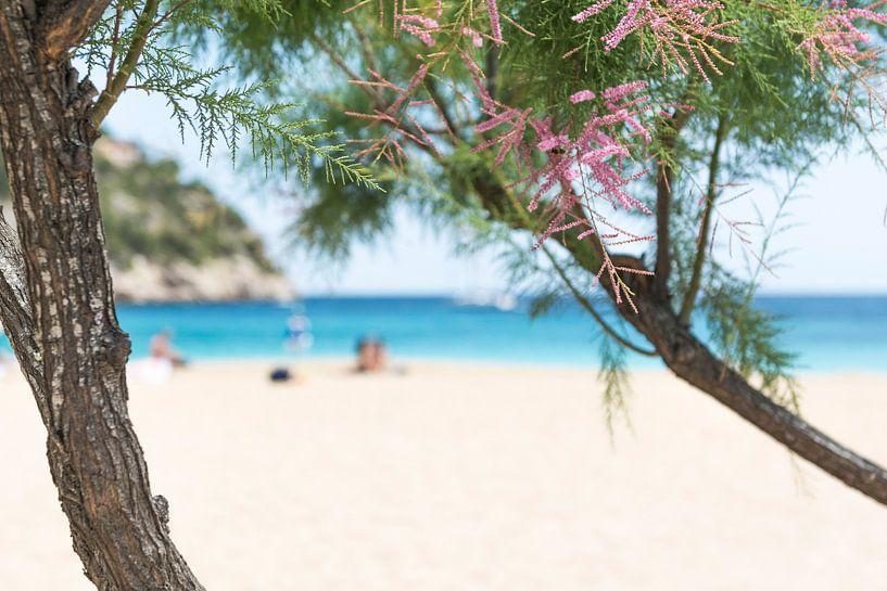 Day at the beach  van Davy Reitsma