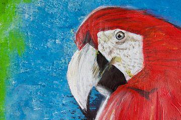 Zwei Papageien 1 von Susanne A. Pasquay