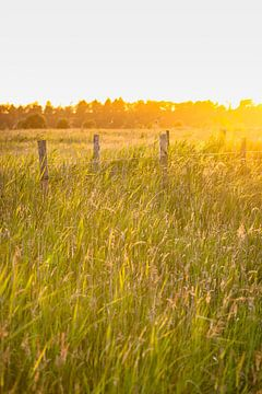 Ondergaande zon tijdens een  zomeravond van Fotografiecor .nl