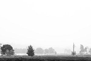 Natuur in zwart-wit van Mark Bolijn