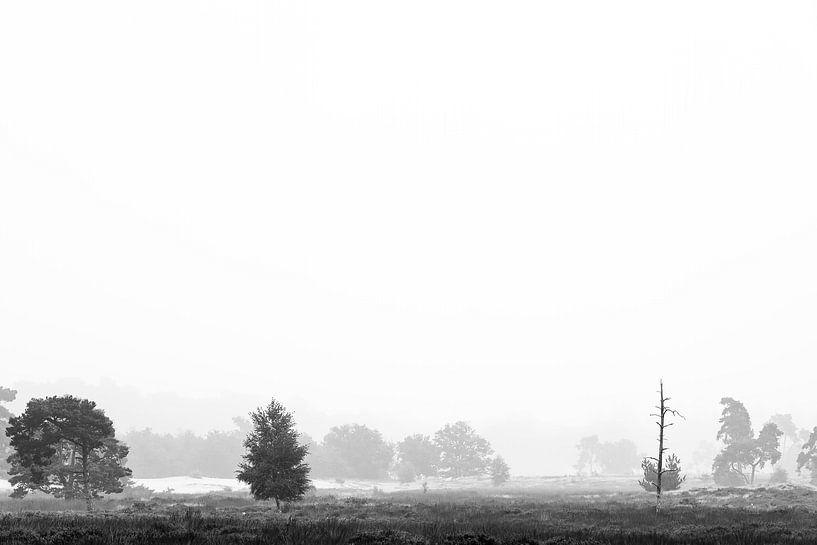 La nature en noir et blanc sur Mark Bolijn
