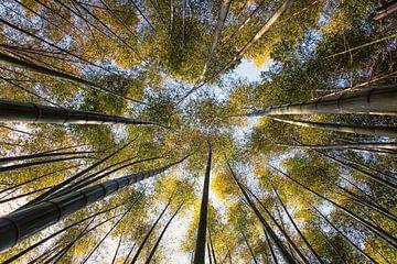 Bambuswald von Manjik Pictures