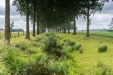 Bomen langs de Oude Biezenkreek, Aardenburg sur Nico de Lezenne Coulander