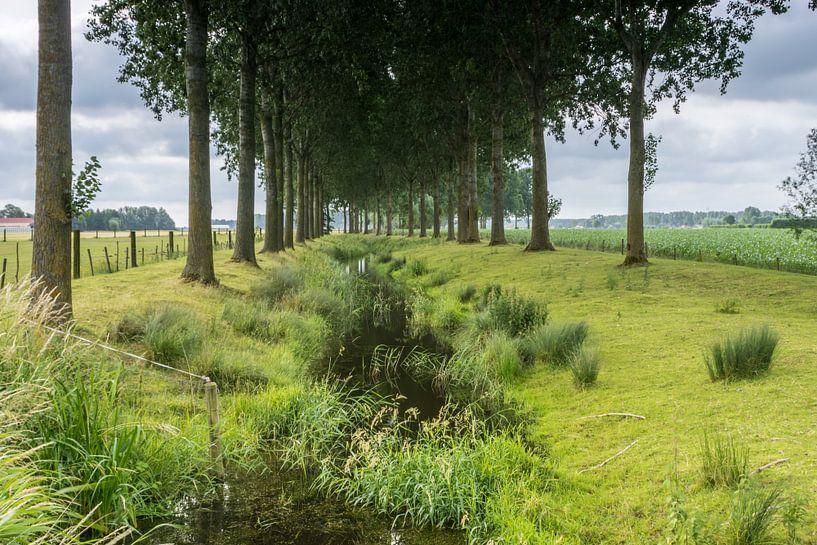 Bomen langs de Oude Biezenkreek, Aardenburg van Nico de Lezenne Coulander
