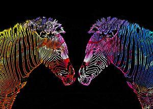Colored zebra