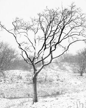 Schnee in den Niederlanden von Sonny Vermeer