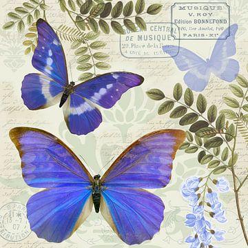 Blaue Morphos van christine b-b müller