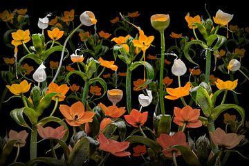 Caltha palustris von Olaf Bruhn