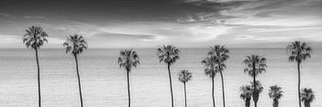 CALIFORNIA Palm-idylle aan zee | Panoramamamonochroom van Melanie Viola