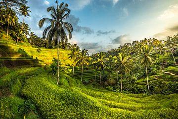 Rijstveld, Ubud Bali van Oscar Limahelu