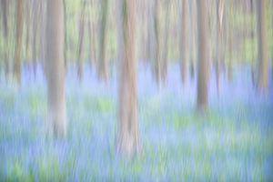 Blue Bells - Ein Traum in blau von