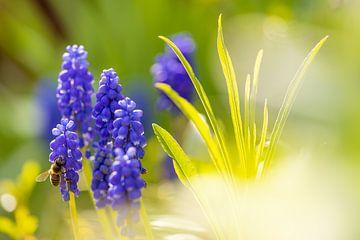 Biene im Frühlingsgarten von Horst Husheer