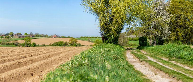 Aardappelvelden in Zuid-Limburg van John Kreukniet