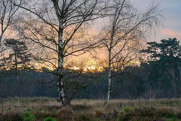 Sonnenaufgang zwischen den Birken von Tania Perneel