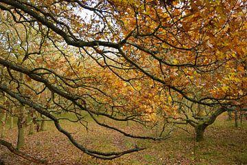 Warme Herbstfarben im Wald von Nicolette Vermeulen