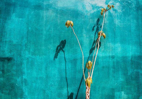 Lichtspel op een groene muur van Paul Teixeira