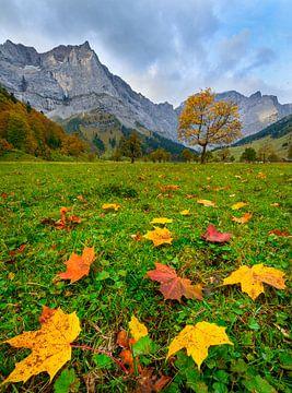 Bunte Ahornblätter in Herbstfärbung im Ahornboden von Denis Feiner