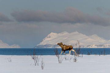 Elch im Winter Norwegische Schneelandschaft von Erwin Maassen van den Brink