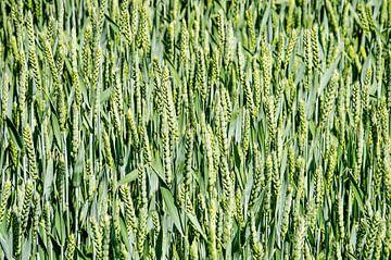 Winkendes Weizen von Frans Blok