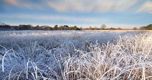 Winterlandschap met berijpte planten en bomen