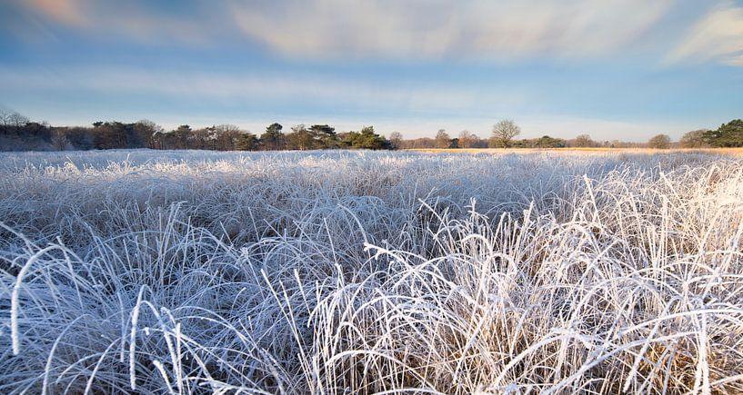 Winterlandschap met berijpte planten en bomen van Peter Bolman