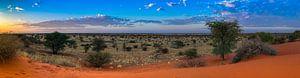 Ochtendzon boven de Kalahari woestijn, Namibië van