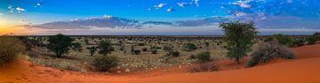 Ochtendzon boven de Kalahari woestijn, Namibië van Rietje Bulthuis