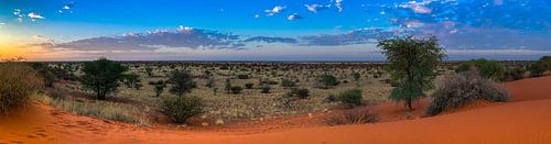 Ochtendzon boven de Kalahari woestijn, Namibië