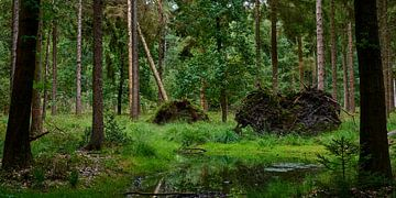 Verstild bos met water en omgevallen bomen in Elspeet