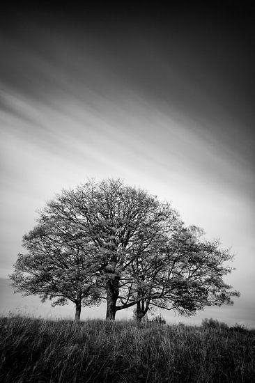 Drie bomen in zwart-wit