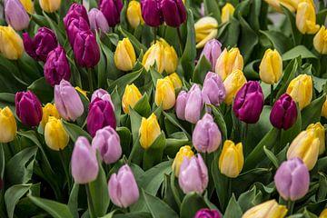 Tulpen in Amsterdam van Sander de Jong