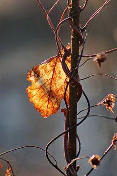 Herbstblatt von John Kerkhofs