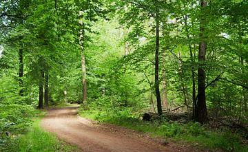 Waldspaziergang von Corinne Welp
