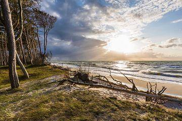 Darßer Weststrand an der Ostsee bei Prerow von Werner Dieterich