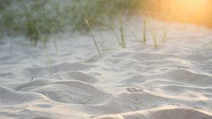 Duinen Vlieland