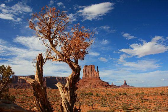 Tree in Monument Valley van Louise Poortvliet