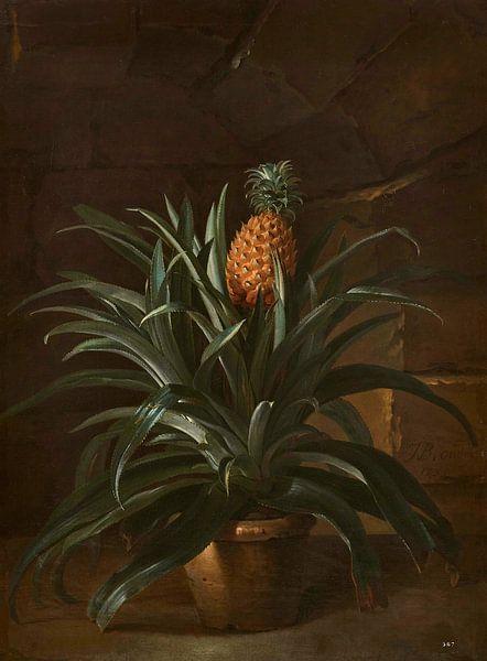 Ananas in einem Topf, Jean-Baptiste Oudry von Meesterlijcke Meesters