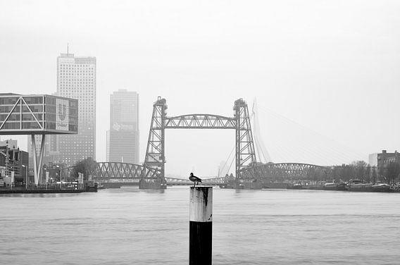 De Hef in Rotterdam van MS Fotografie