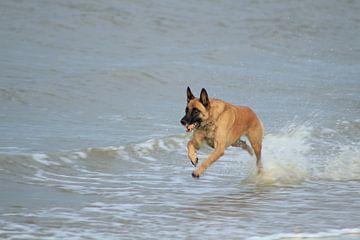 actie foto hond van
