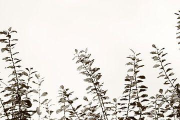 grijze natuur van milan willems