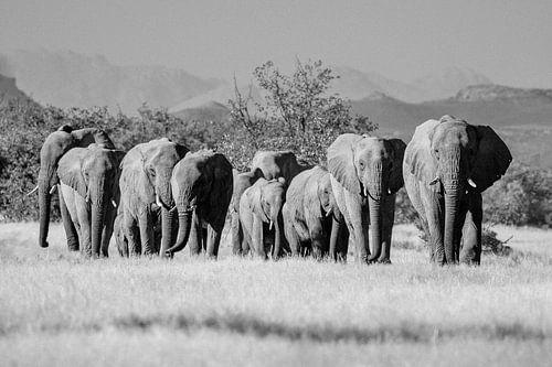 Zwart-wit foto van kudde woestijnolifanten / olifanten bij Twyfelfontein, Namibië van Martijn Smeets
