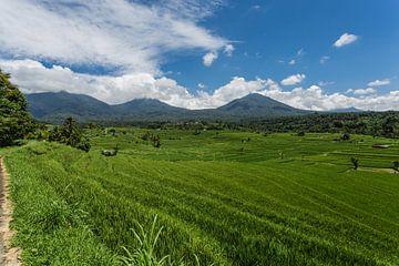 Rijstveld op het eiland Bali met uitzicht op de vulkaan, Indonesië van Stefan van der Wijst