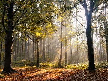 Herbstwald in der Sonne von Odette Kleeblatt